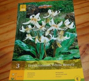 Erythronium White Beauty DSC_0331.jpg