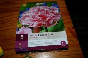 tulipe queensland DSC_0338.jpg