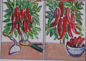 poivrons,récolte de poivrons