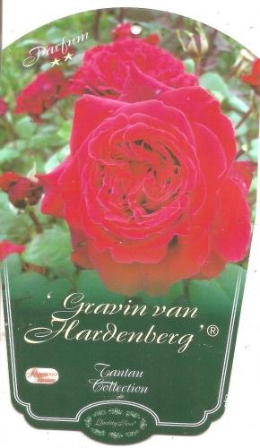 rosier,graven van hardenberg