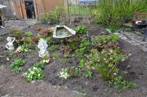 jardin de plantes d ombre